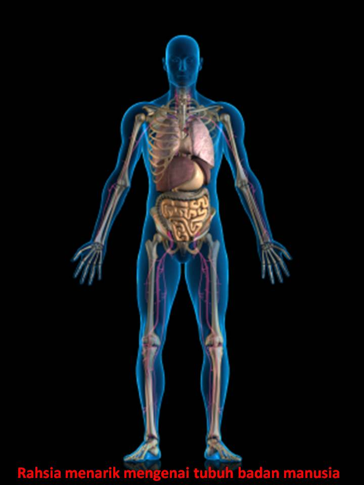 http://sifuliterapi.files.wordpress.com/2012/09/rahsia-menarik-mengenai-tubuh-badan-manusia.jpg
