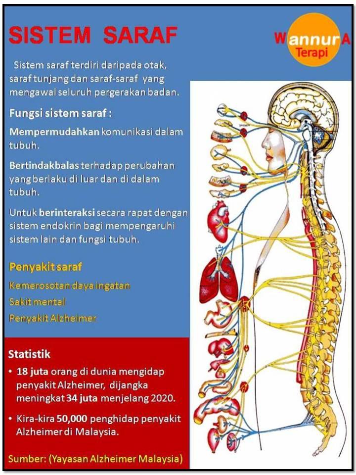 Sistem saraf manusia | Sifuli Terapi